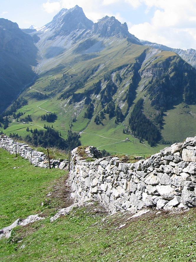 123_StiftBaum_alp_San_2011-15_Baumgartenalp
